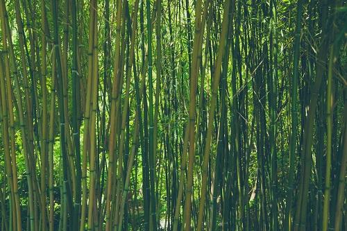 Čínsky bambus je veľmi zvláštna rastlina. Keď ho zasadíte, prvé štyri roky vôbec nerastie – aspoň nám sa to tak zdá. Človek by mal pokušenie vykopať a zasadiť si radšej niečo iné. Ale trpezliví čínski záhradníci vedia svoje. Preto rastlinku trpezlivo okopávajú a polievajú, aj keď je stále rovnako malá. Potom sa však niečo stane. V priebehu piateho roka vyrastie zrazu za 60 dní do 30 metrovej výšky. Keby ste ho videli a nevedeli by ste, ako rastie, čo by ste povedali? Že vyrástol za 60 dní, alebo za 5 rokov?  Myslím si, že aj náš život sa podobá čínskemu bambusu. Niekedy sa celé roky snažíme a snažíme... a zdá sa, že sa nedeje vôbec nič. Ak však trpezlivo robíš to, čo je správne, výsledok sa určite dostaví a tvoje úsilie bude odmenené. 🙂  Kto má trpezlivosť, dokáže všetko, čo chce.