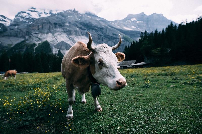 """Počul si o farmárovi, ktorý bol nespokojný so svojou farmou a rozhodol sa ju predať?  O pár dní neskôr mu volala jeho realitná agentka a chcela súhlas na inzerát do miestnych novín. Prečítala farmárovi text inzerátu. Inzerát opisoval prekrásnu farmu s ideálnou polohou. Táto farma bola skutočne tichá a pokojná, obklopovali ju vrchy, občerstvovalo jazero a bol na nej dobre chovaný dobytok.  Farmár si to vypočul a povedal: """" Prečítajte mi to ešte raz."""" Keď to počul drukýkrát, povedal: """"Rozmyslel som si to. Nepredám ju. Také miesto som hľadal celý život."""" ❤️"""